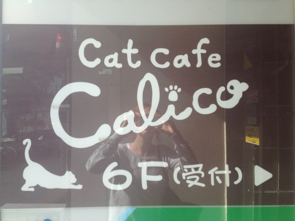 Did, in fact, turn out to be a cafe full of cats & not the other kind of pussy...
