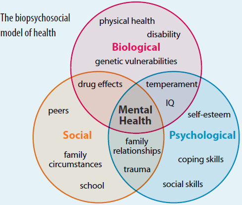 The 'Biopsychosocial' model of health. A simplistic look at the varying contributing factors to mental health. There are many.